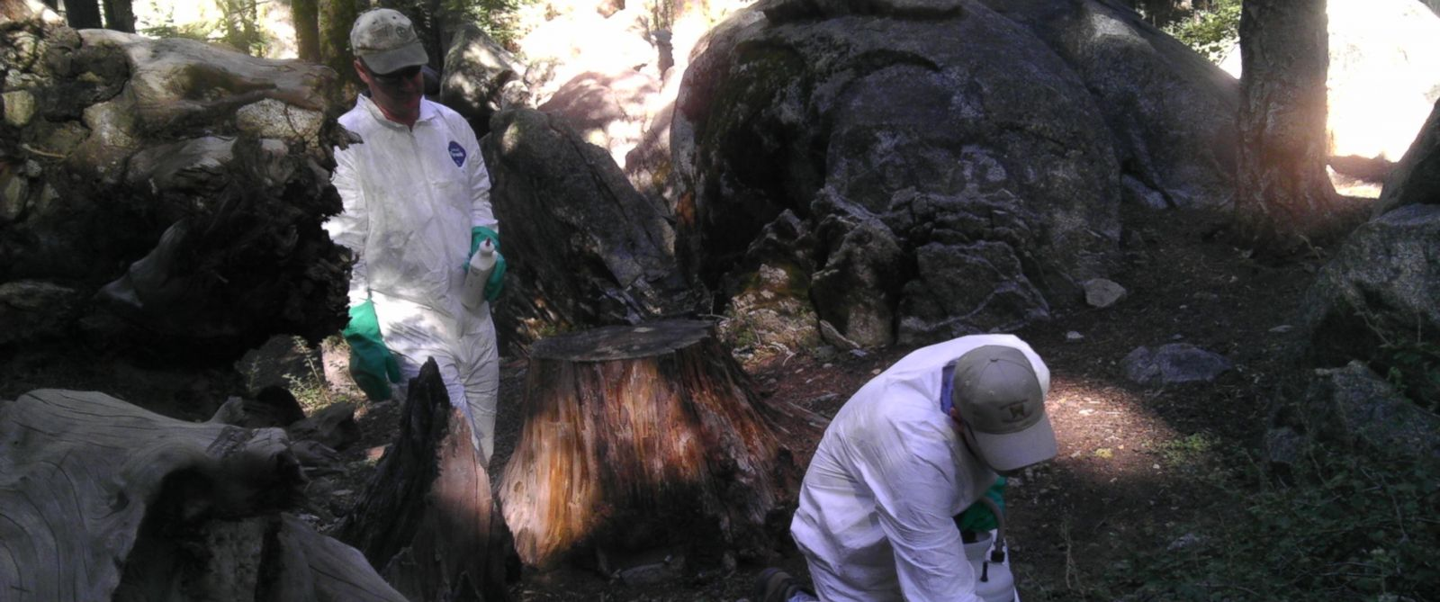 PHOTO: CDPH investigators performing flea treatment at the Crane Flat campground, Yosemite National Park. Investigators treated for fleas in the campground burrows during the week.