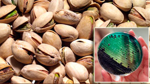 PHOTO Food safety inspectors say a California plant at the center of a salmonella scare knew some of its pistachios were tainted but continued shipping nuts for another six months.