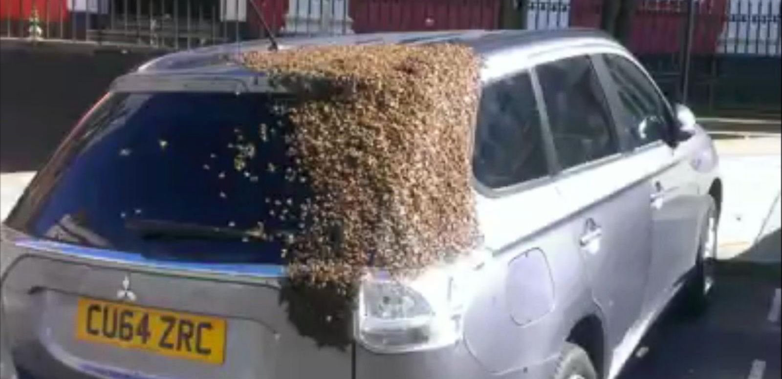 "The man who recorded the bees said it was the ""best thing to happen"" in years."