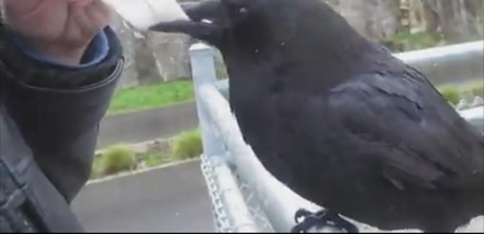 """It is not the first time the VPD has had an encounter with this same crow."""
