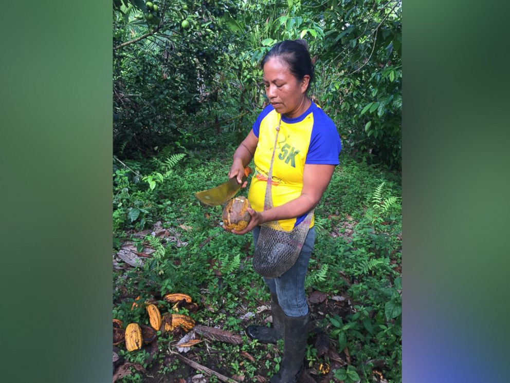 PHOTO: Among the 3,000 farmers harvesting the leaves is a woman named Ruth, who cuts bales of Guayusa leaves with a machete every day.