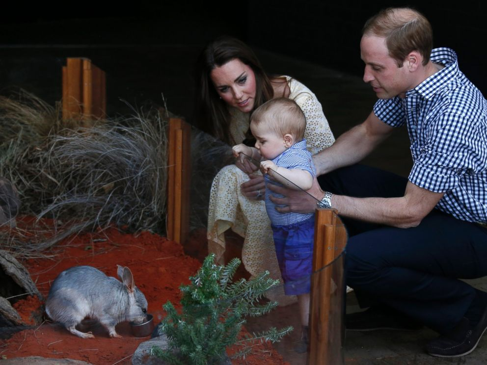 PHOTO: Britains Prince William and his wife Kate, the Duchess of Cambridge, watch their son Prince George looking at an Australian animal, called Bilby, which has been named after the young Prince, during a visit to Sydneys Taronga Zoo, April 20, 2014.