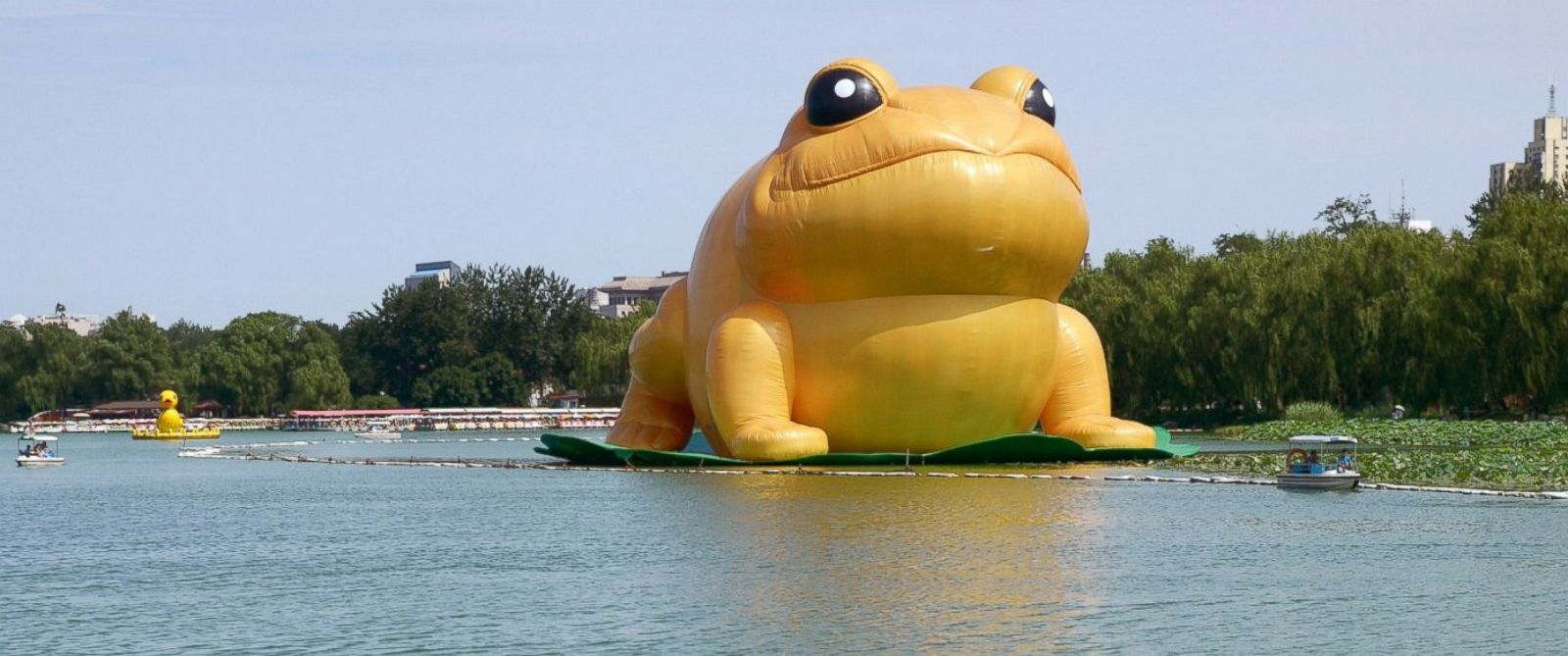 """PHOTO: People ride in a boat near a 70-foot-tall inflatable """"big golden toad"""" by Chinese artist Guo Yongyao, displayed at Yu Yuan Tan Park in Beijing, July 21, 2014."""
