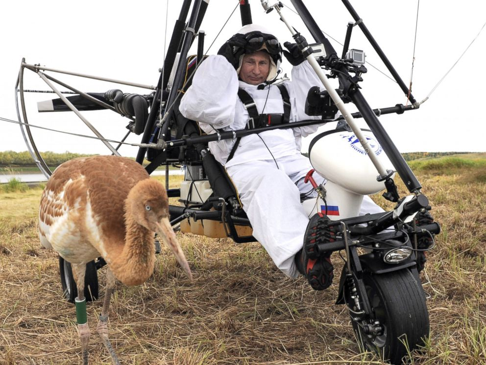 PHOTO: Russian President Vladimir Putin prepares to pilot a motorized hang glider while looking at a crane as he takes part in a scientific experiment as part of the Flight of Hope, which aims to preserve a rare species of cranes, Sept. 5, 2012.