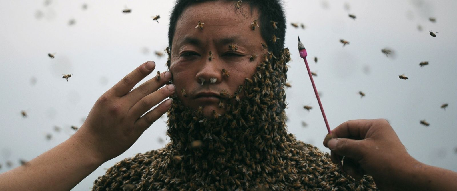 PHOTO: This picture taken on April 9, 2014 shows She Ping, a 34 year-old local beekeeper, covered with a swarm of bees on a small hill in southwest Chinas Chongqing.