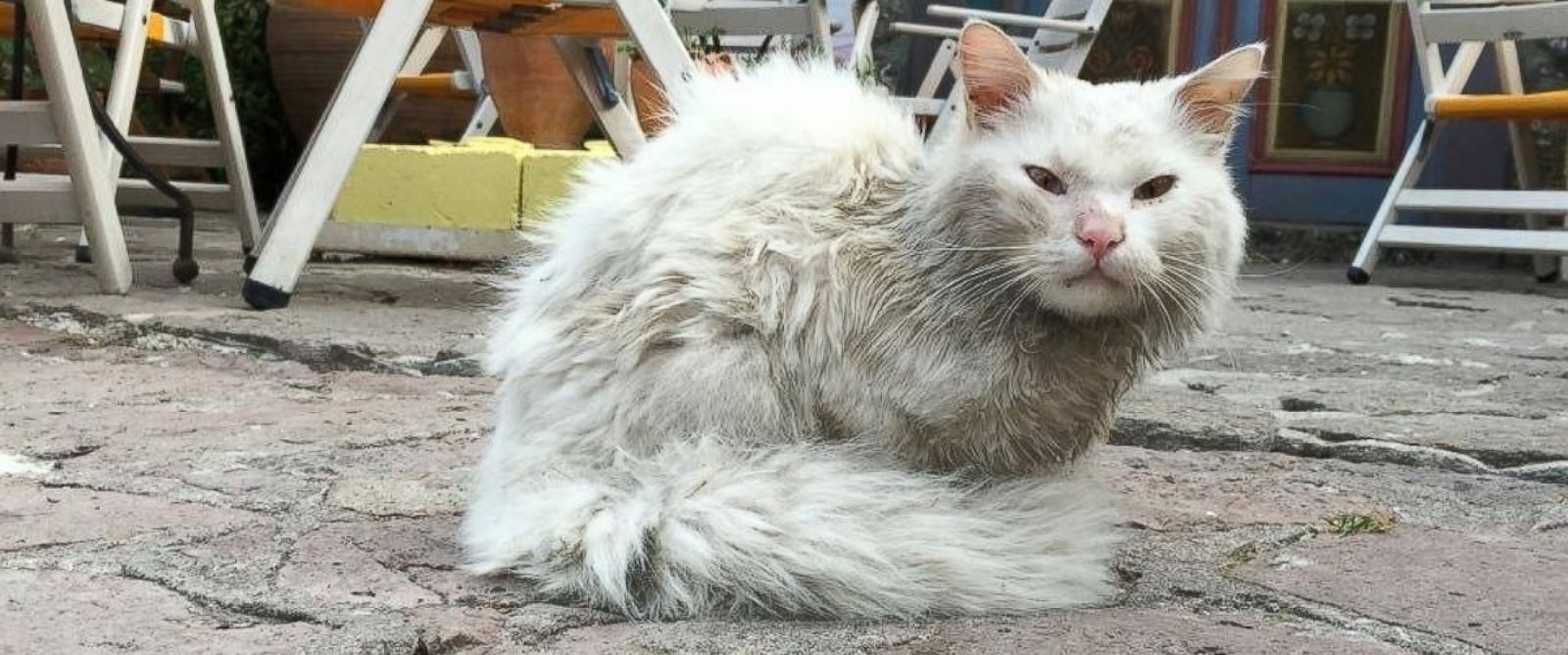 PHOTO: Dias the cat is seen in the streets of Lesvos, Greece, after being separated from his family.