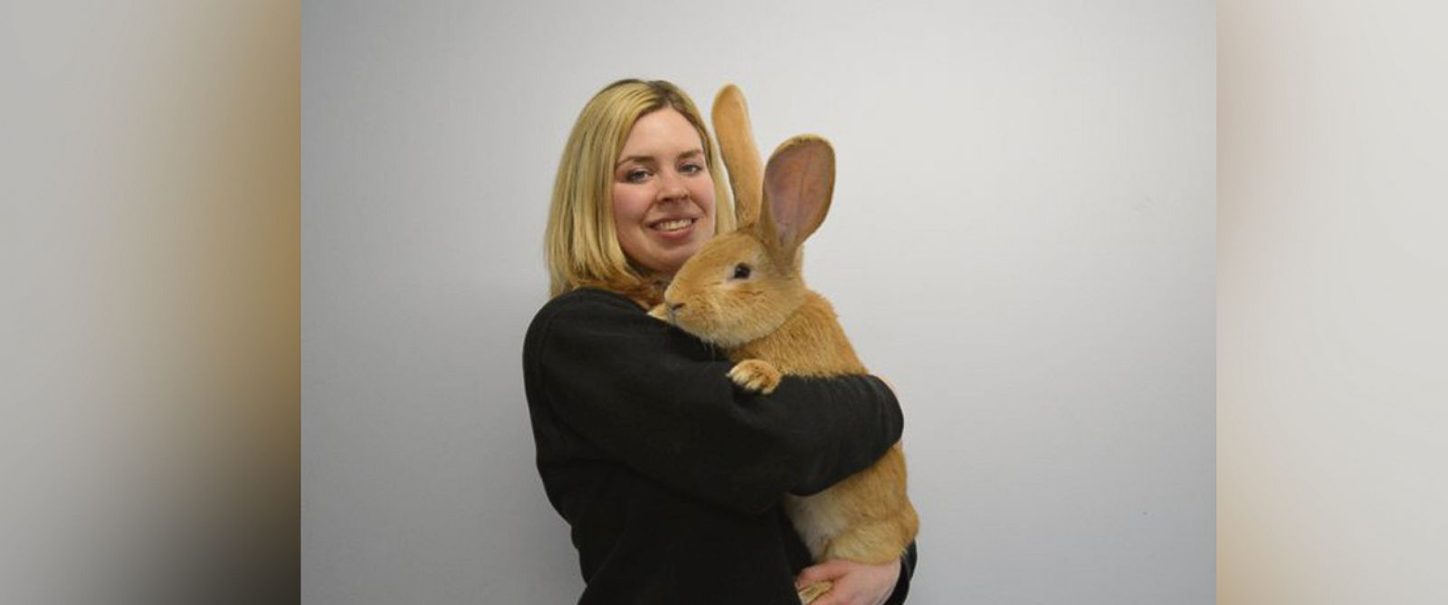 """PHOTO: The Scottish SPCA posted this photo to their twitter account with the caption, """"Atlas, our larger than life rabbit, needs a new home,"""" on Feb. 8, 2016."""