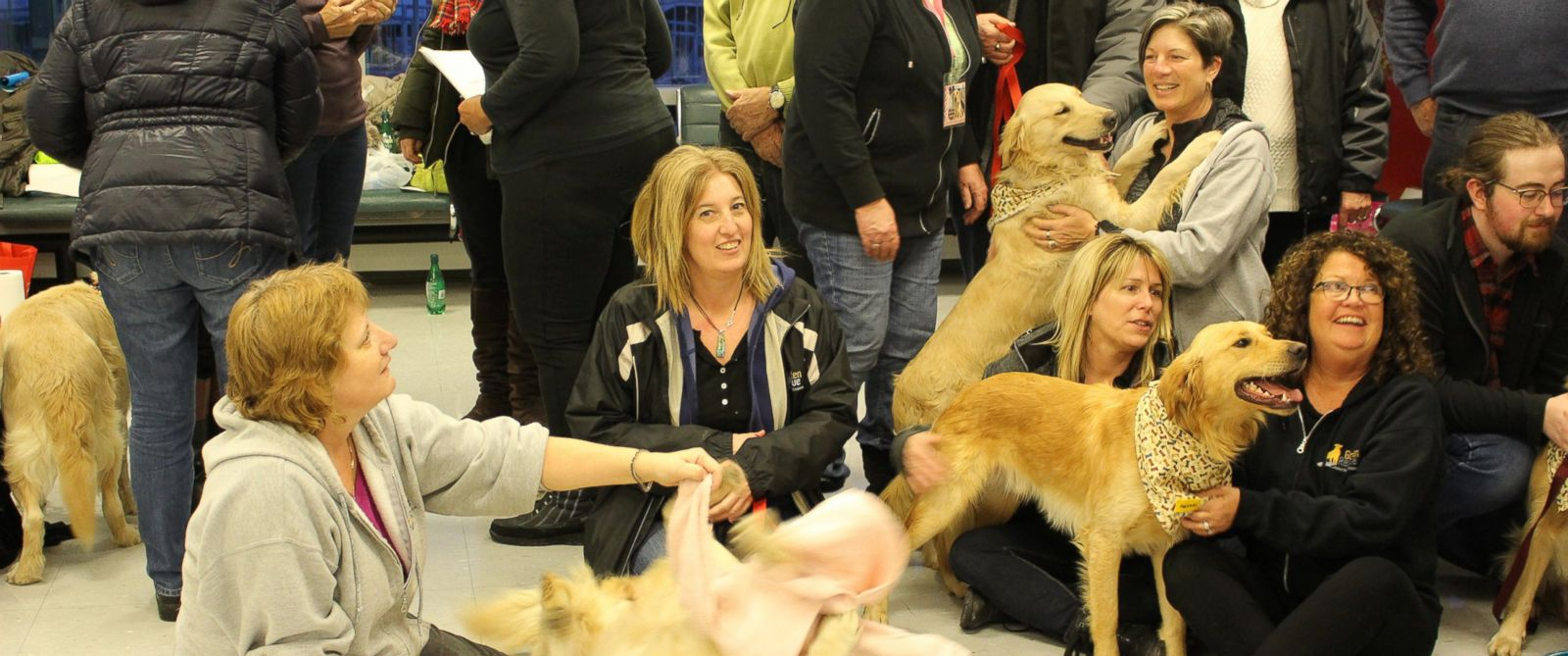 PHOTO: Eight Golden Retrievers were flown from Istanbul, Turkey to Toronto Pearson International Airport to meet their new owners.