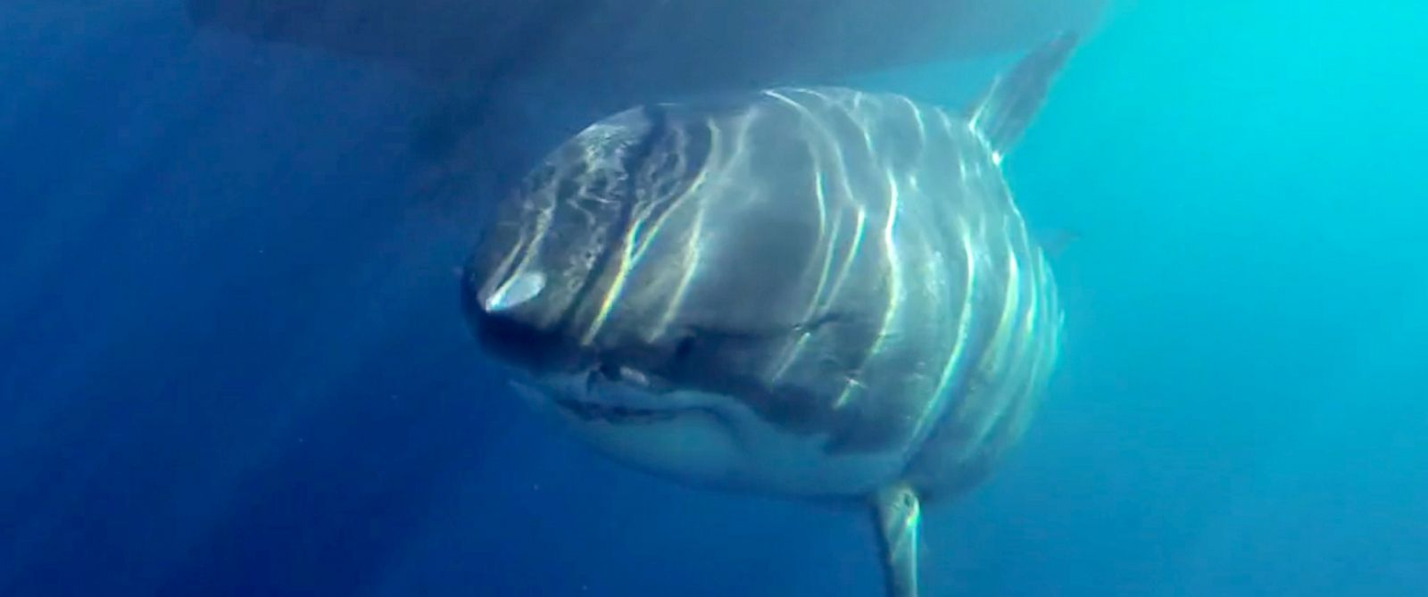 PHOTO: Deep Blue will be featured on Shweekend premiering on Discovery Aug 29 and 30th.