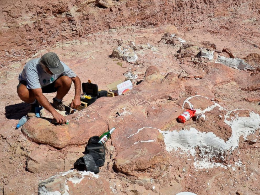 PHOTO: Researchers with the Museum of Palaeontology Egidio Feruglio found fossils of a dinosaur they believe was the largest creature to have ever walked the earth.