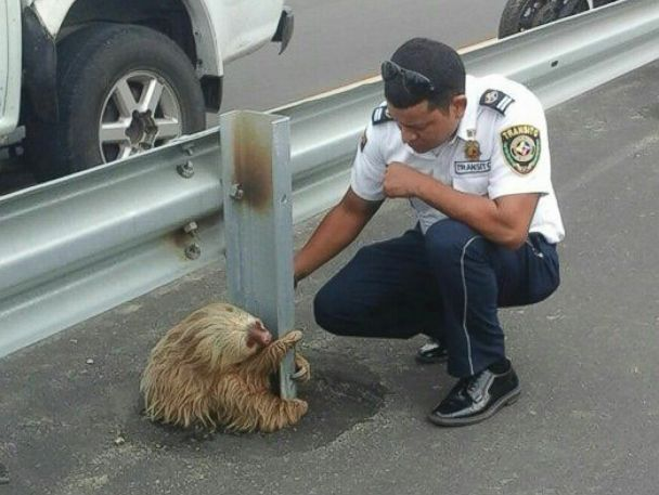 PHOTO: Transportation officers in Los Rios, Ecuador rescued a sloth, Jan. 22, 2015.