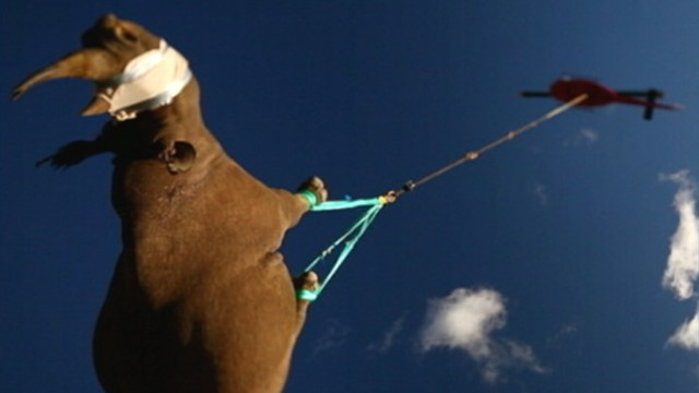 VIDEO: Military helicopter hauls endangered animals to safer ground in South Africa.