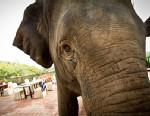 PHOTO: Elephant in Thailand