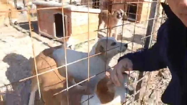 VIDEO: About 100 dogs are being housed at a shelter funded by Russian billionaire Oleg Deripaska.
