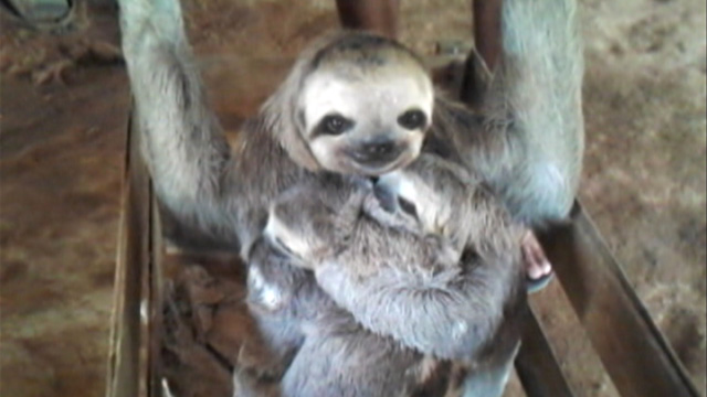 PHOTO: Sloth family