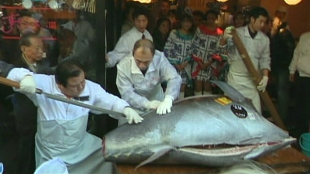 VIDEO: The nearly 600-pound fish was caught of northern coast of Japan.
