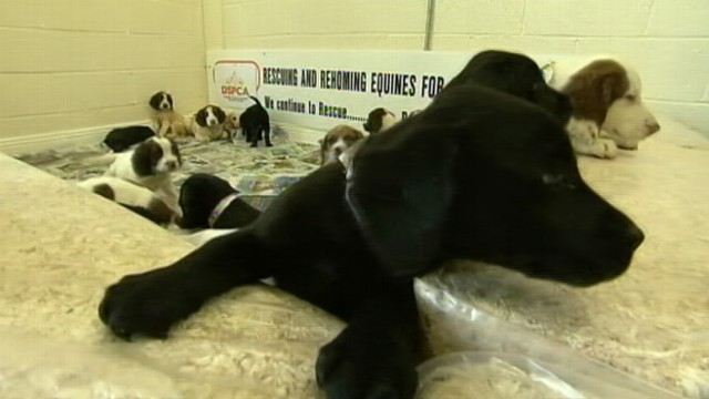 VIDEO: Various breeds were recovered from the back of two cars by police in Ireland.