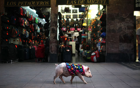 ap Mexico Pet Pig nt 120224 wblog Today in Pictures: Bolivia Disabled Protest, Kerobokan Prison Riot, and Myanmar Democracy