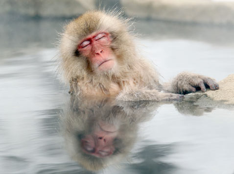 ap japan Monkey ss thg 120213 wblog Today in Pictures: Snow Monkeys, Athens Clashes, Westminster Dogs, and The Grammys