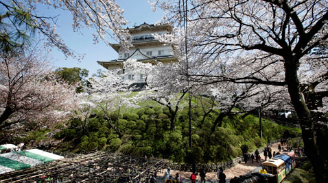 ap japan cherry blossoms ss thg 120410 wblog Today in Pictures, Syrian Protests, Sikh Pilgrims, Gymnastics, Trapped Miners and Puppies