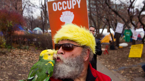 ap occupy Toronto parrot thg 111122 wblog Today in Pictures : Nov. 22, 2011
