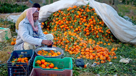 ap pakistan orange seller ss thg 120313 wblog Today in Pictures: Cheltenham Horse Race, Gaza Mourns, Afghanistan Protests, and Turtles