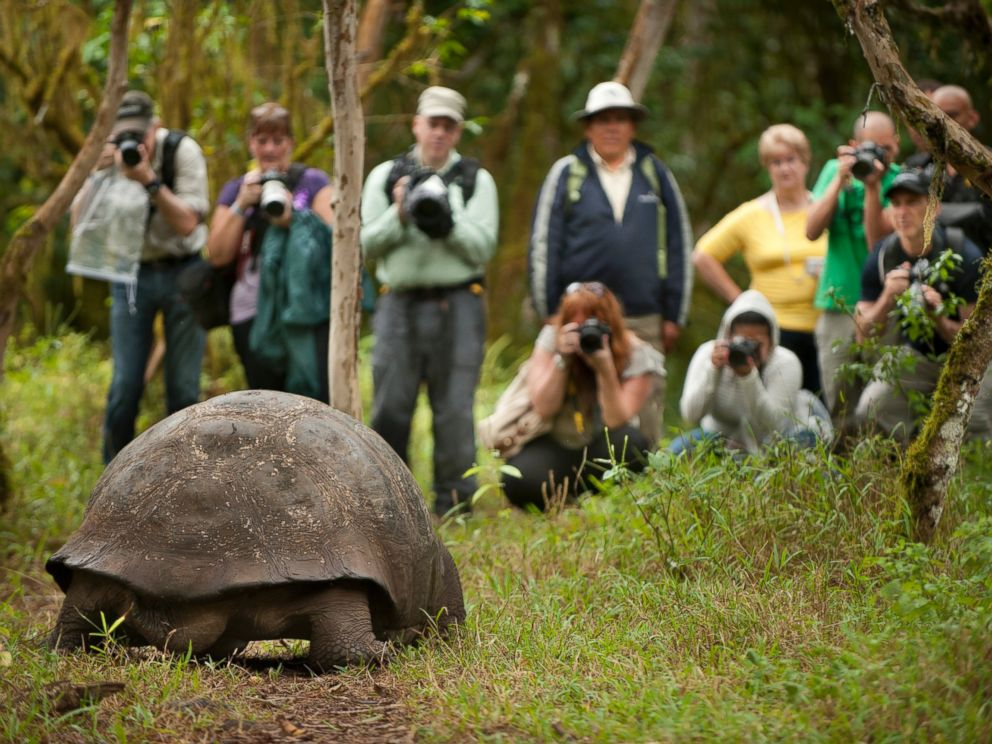 PHOTO: Tourists photograph a giant tortoise eating fruit in the forest in the Galapagos Islands on June 11, 2013.
