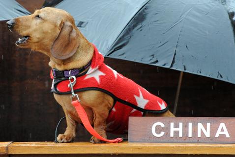 gty dachshund un 01 nt 120605 wblog Dachshund U.N. Gathers in Sydney, Australia