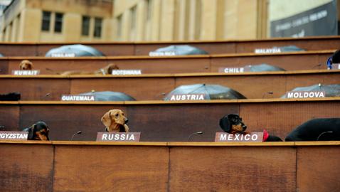 gty dachshund un 02 nt 120605 wblog Dachshund U.N. Gathers in Sydney, Australia