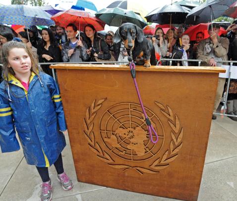 gty dachshund un 03 nt 120605 wblog Dachshund U.N. Gathers in Sydney, Australia