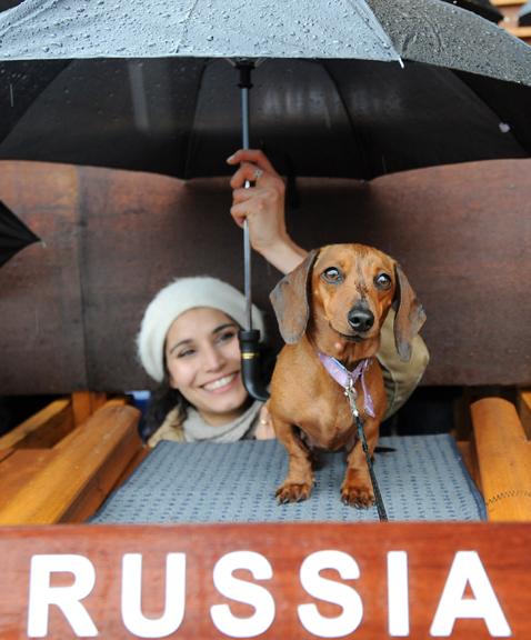 gty dachshund un 04 nt 120605 wblog Dachshund U.N. Gathers in Sydney, Australia
