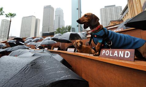 gty dachshund un 05 nt 120605 wblog Dachshund U.N. Gathers in Sydney, Australia