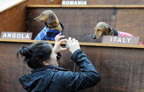gty dachshund un 06 nt 120605 wblog Dachshund U.N. Gathers in Sydney, Australia
