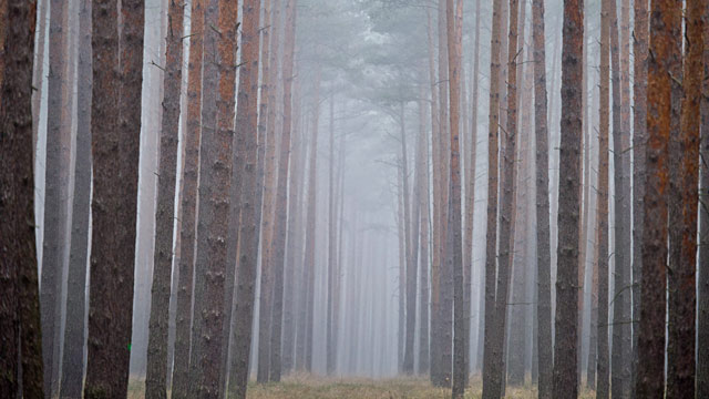 PHOTO: German forest