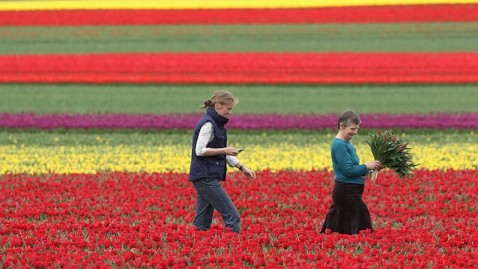 gty germany tulip blossom ll 120427 wblog Today in Pictures: Tulips Bloom, Bahrain Protest, Penn Relays
