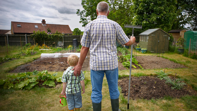 PHOTO: Grandfather and Grandson stand back looking at their vegetable patch.