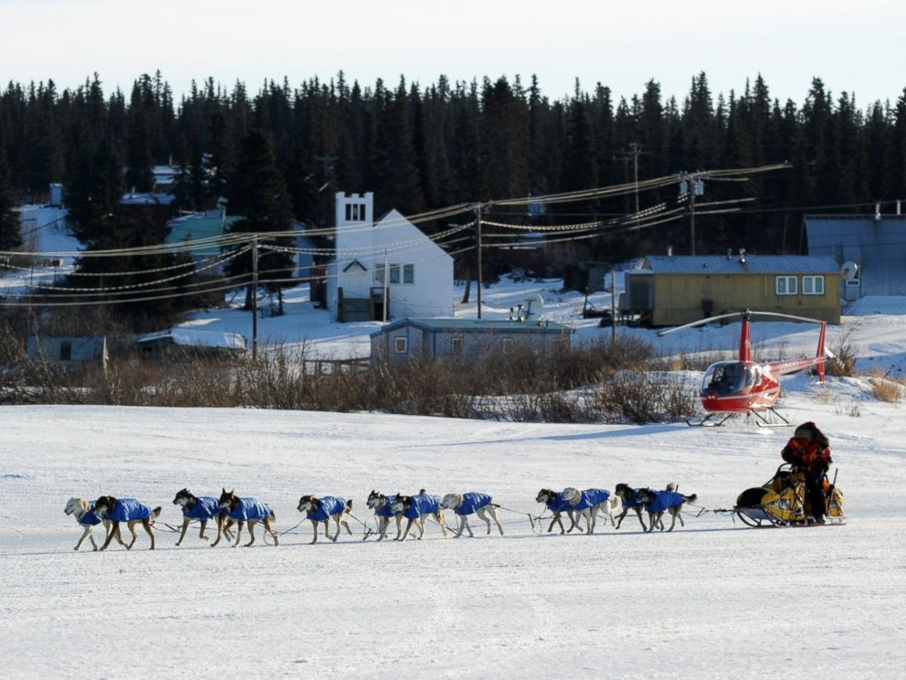 PHOTO: Mitch Seavey arrives at the White Mountain, Alaska, checkpoint during the Iditarod Trail Sled Dog Race on March 10, 2014.