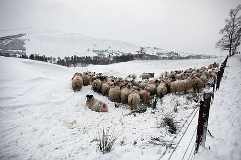 gty scotland snow 142363215 ll 120403 wblog Today in Pictures: Russian Dance, Kansas Falls, Rescued Pit Bulls