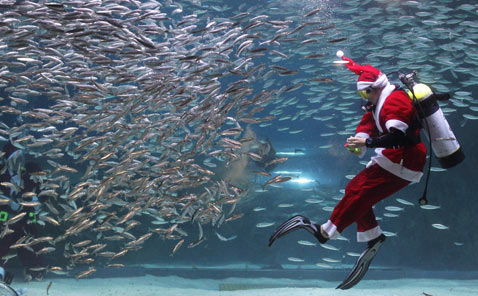 gty scuba santa fish thg 121210 wblog Today in Pictures: Gay Marriage, Hanukkah, Egypt Protests, Christmas Lights and Elephants