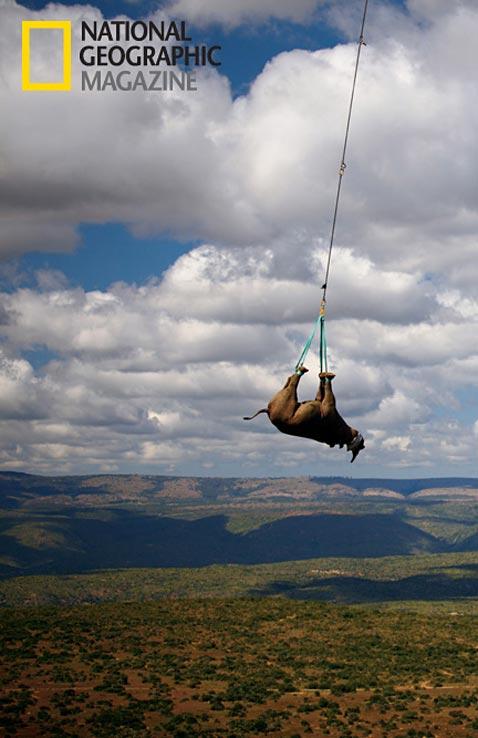 ht rhinos MM8054 002 vblog Rhino Wars: The Violent World of Poachers and Black Market Medicine