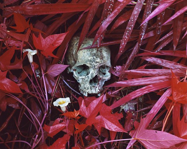ht richard mosse lilies remains lpl 130605 IMAGES: Richard Mosse Rethinks War Photography