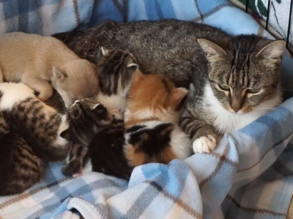 Lactation and breastfeeding 02 5