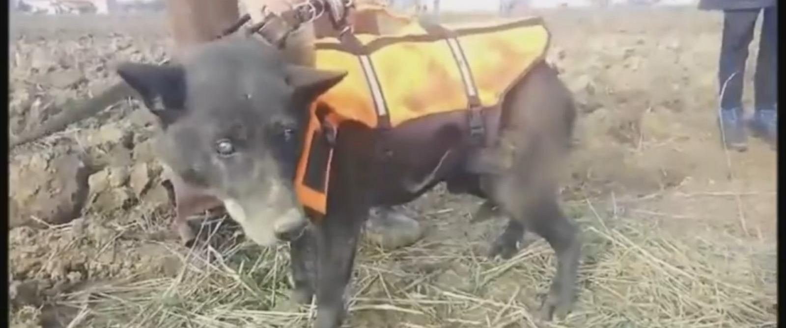 PHOTO: Christmas the dog was rescued from a well in Bosnia last week. Christmas was kept alive after local Bosnian children threw food down to him.