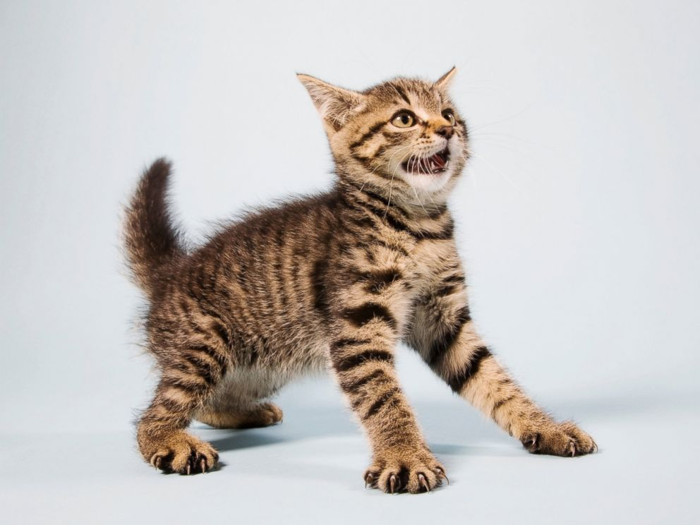 PHOTO: A scared kitten is pictured in this undated stock photo.