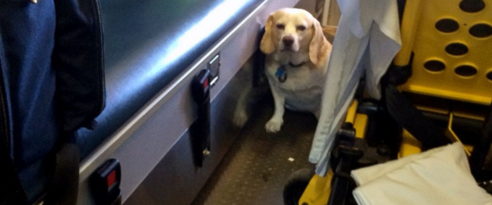 PHOTO: Buddy, a 4-year-old part-beagle, sits in the back of an ambulance in Mason, Texas, Oct. 26, 2014.