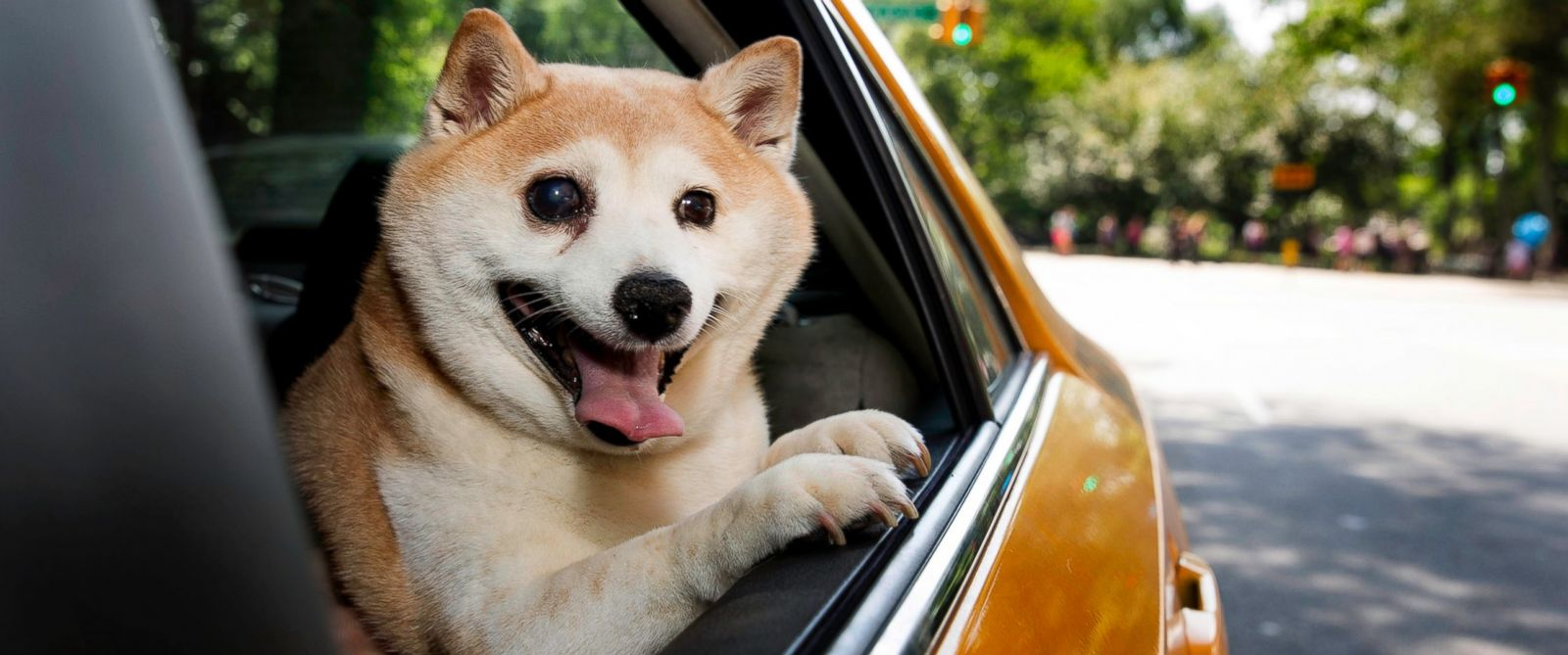 PHOTO: Cinnamon the happy dog smiles in a New York Taxi, May 30, 2015.