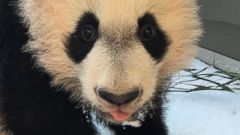 Bei Bei Experiences Snow for the First Time