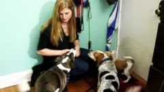 PHOTO: Kelsey Risher of Chicago pays her rent with the money she makes from turning her home into a doggy hotel through DogVacay.