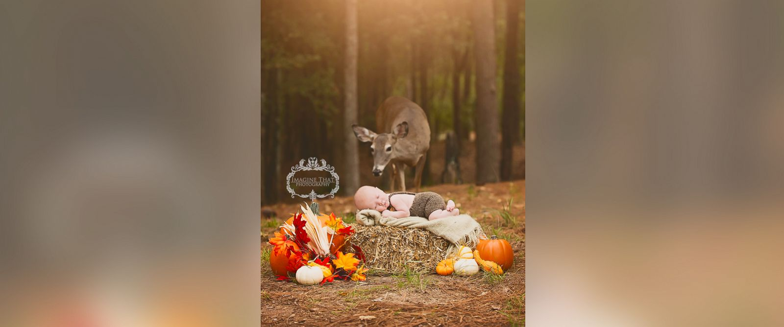PHOTO: Megan Rion, owner of Imagine That Photography by Megan Rion, photographed Maggie the deer in an infant shoot on October 20.