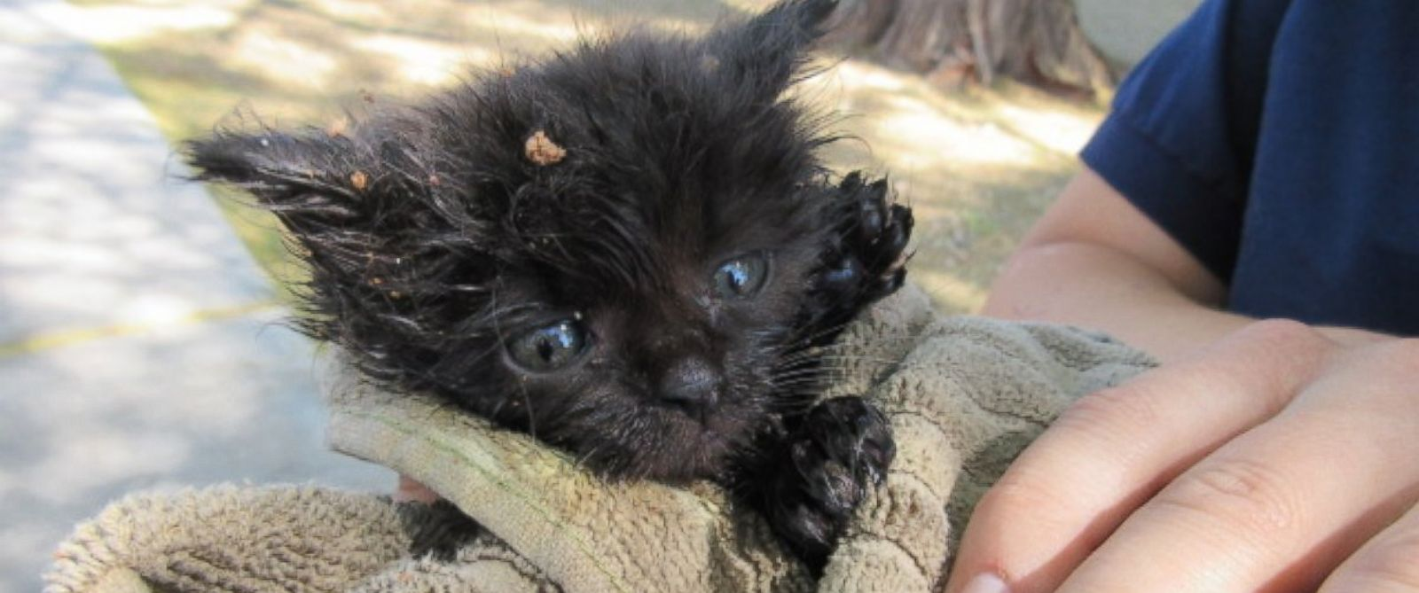 tiny kitten is now recovering after being rescued from a manhole in